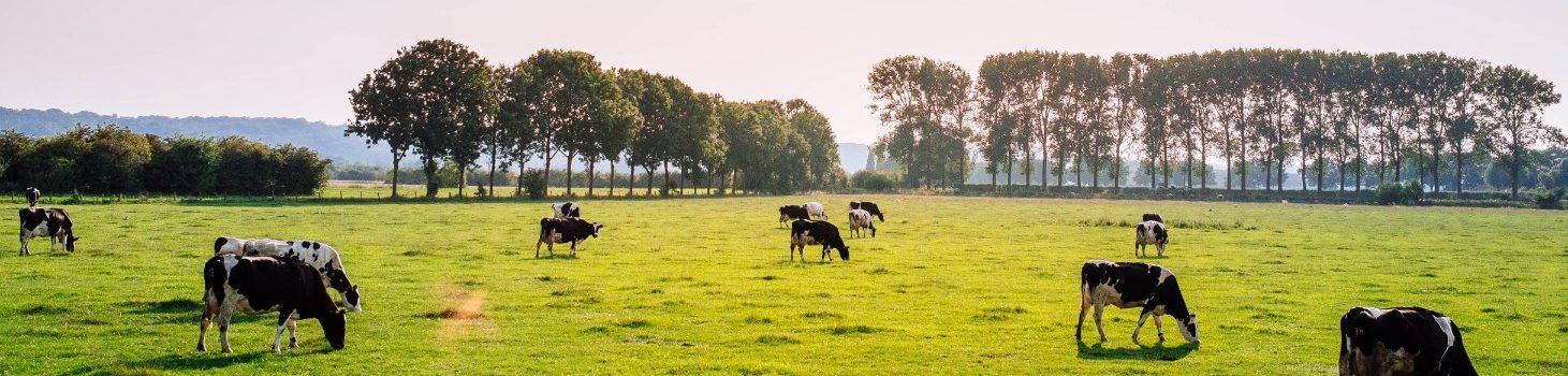 groenehartkloppendhart.nl