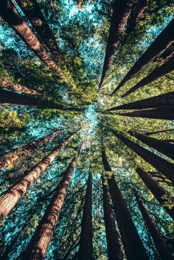 kracht van bomen