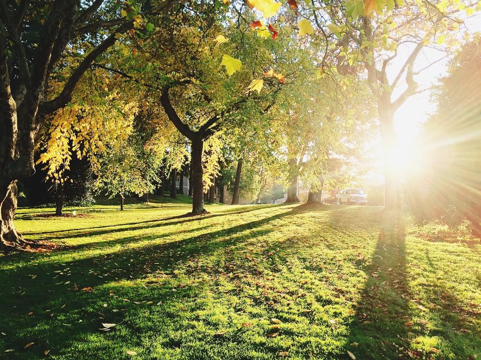 Park Den Haag